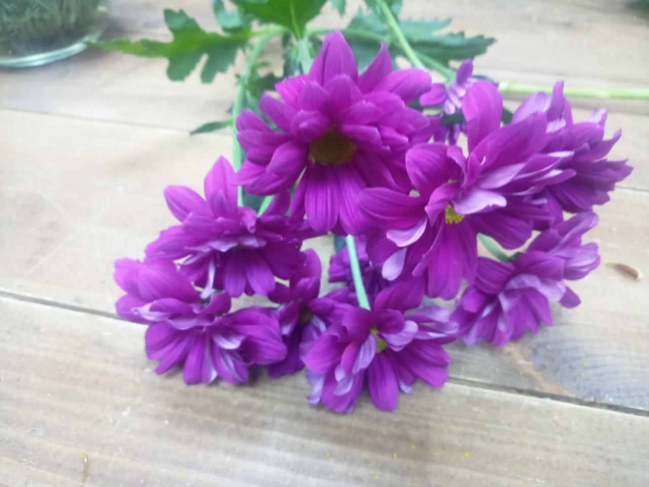 Хризантемы фиолетовые купить в Казани