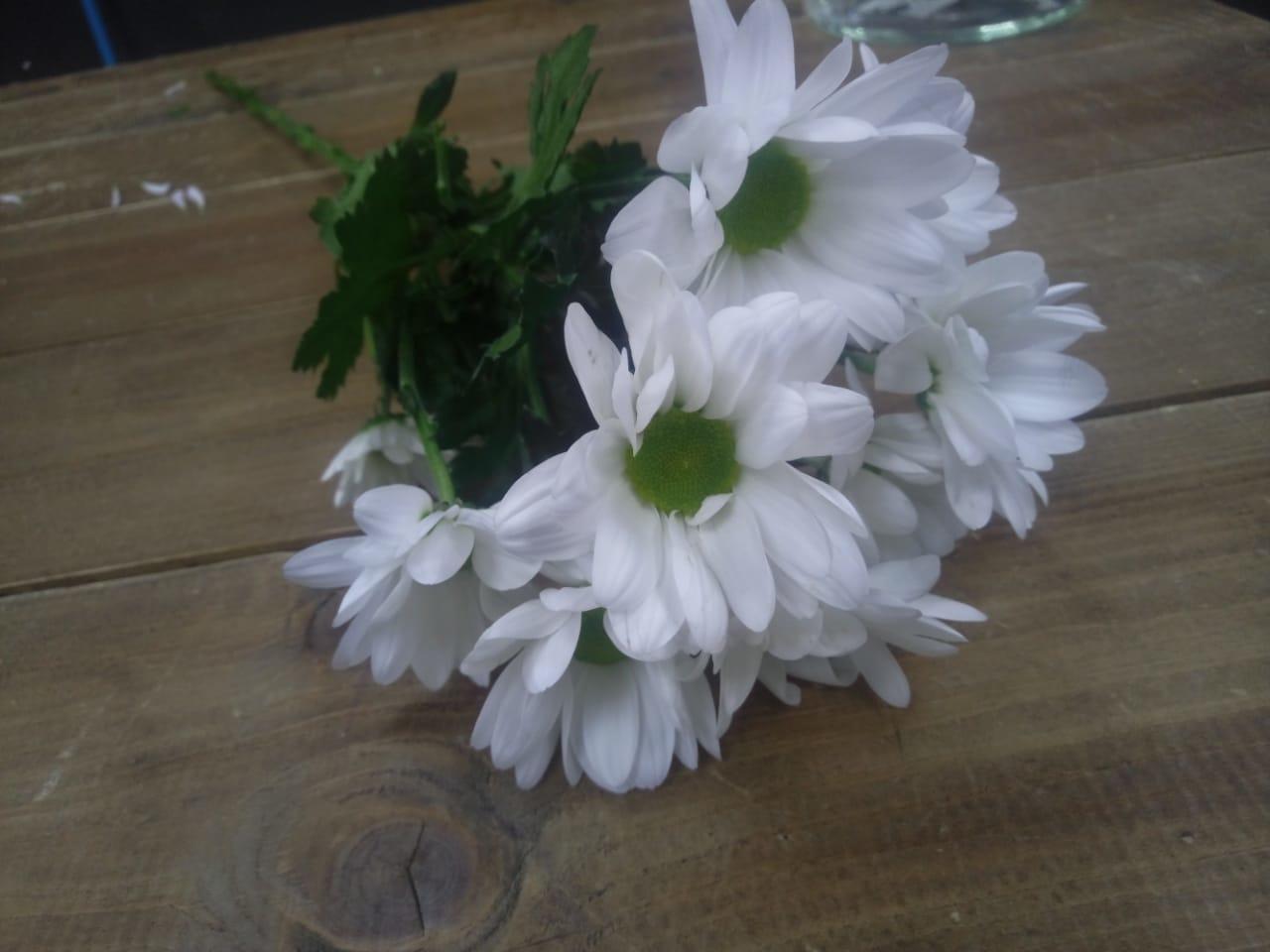 Хризантемы ромашковидные купить в Казани