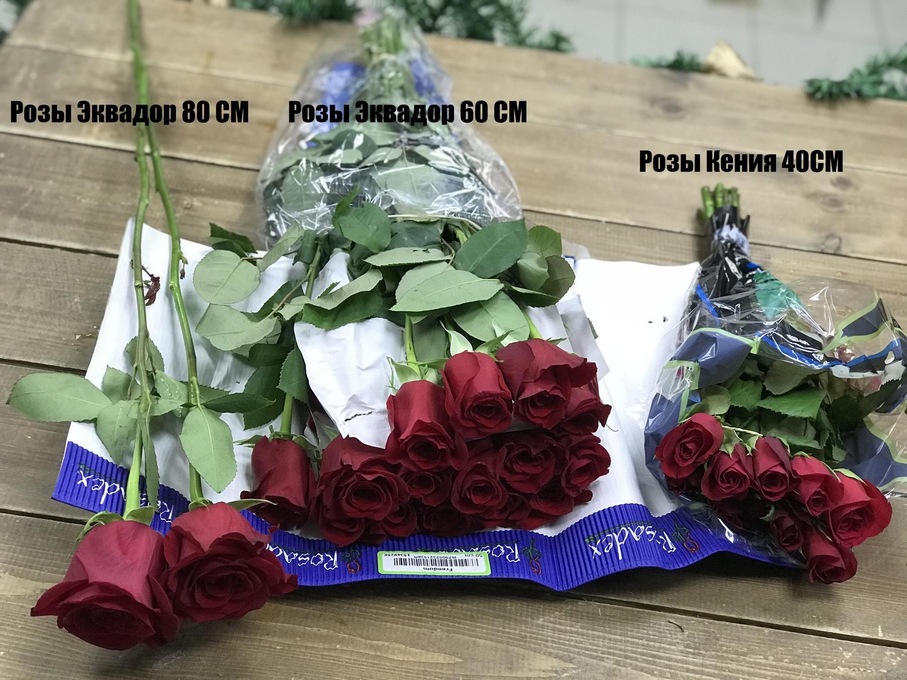 В чем отличие Кенийских и Эквадорских роз