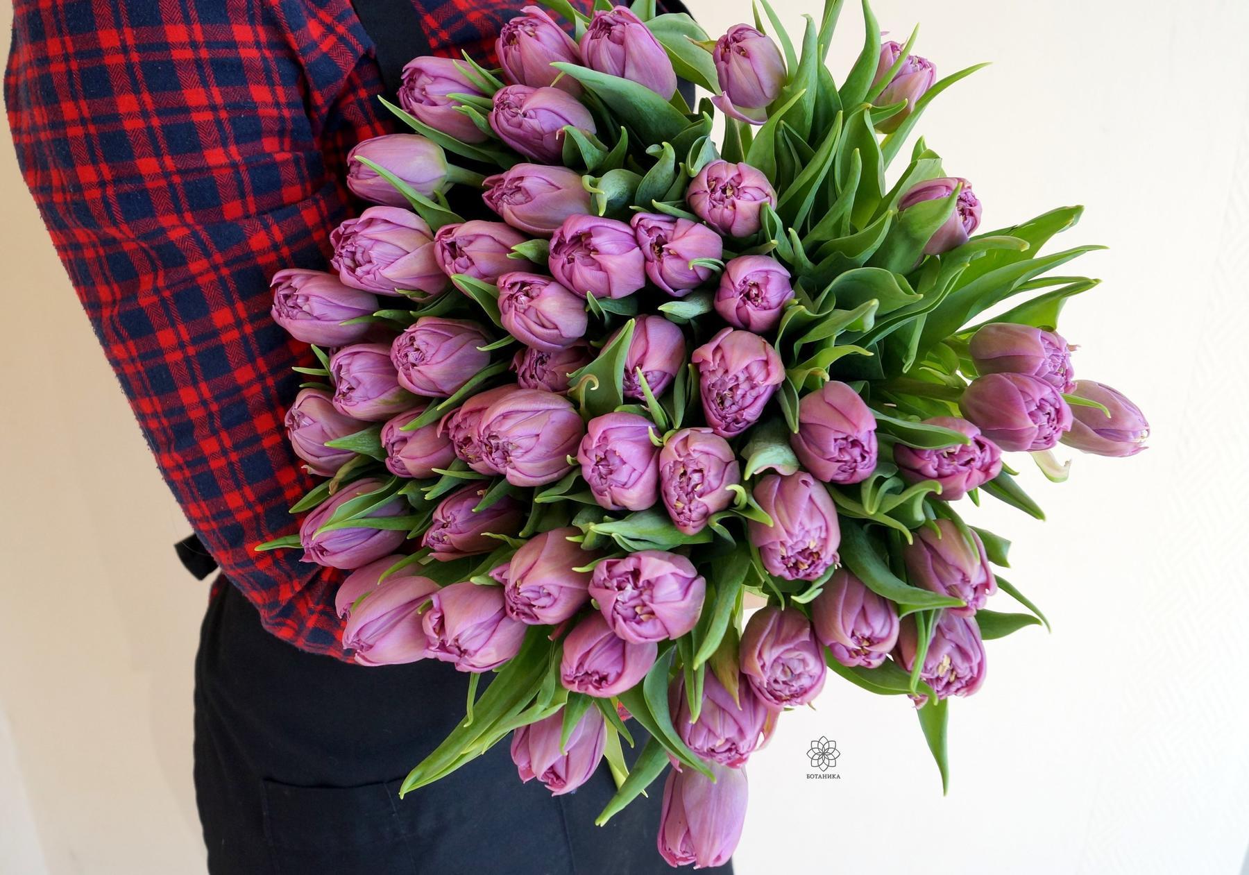 происхождение тюльпанов