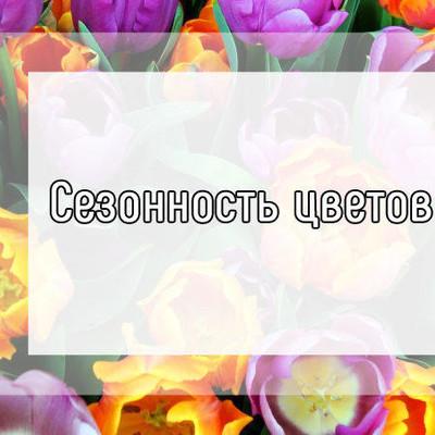 Сезонные цветы, какие цветы продаются в определенное время года