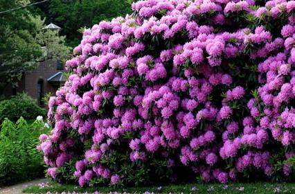 Самые опасные цветы в мире