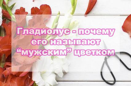 Гладиолус - самый мужской цветок, почему его так называют