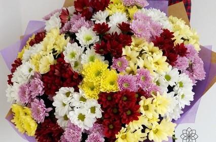 Цветы Хризантемы: Виды, уход