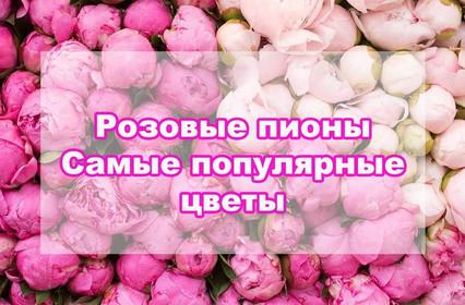 Розовые пионы - почему они так популярны?