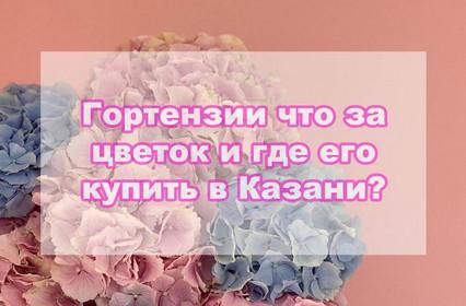 Гортензии что за цветок и где его купить в Казани?