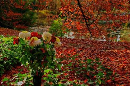 Осенние Букеты и цветочные композиции 2018