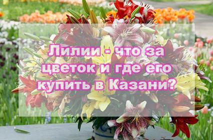 Лилии - что это за цветок и где его купить в Казани