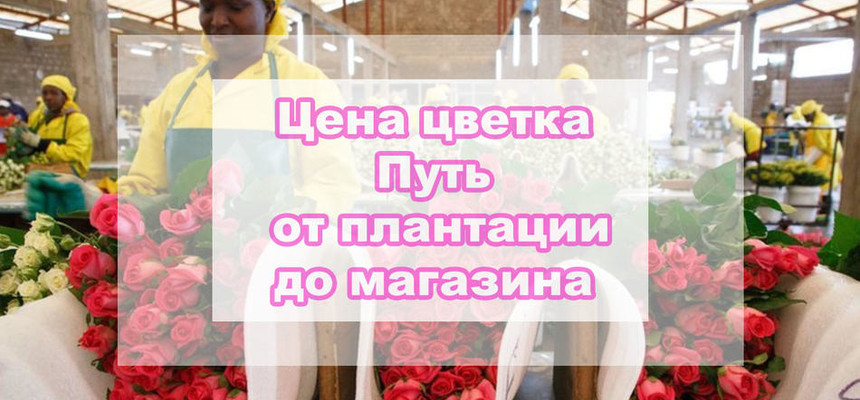 Цена цветка - путь от плантации до покупателя