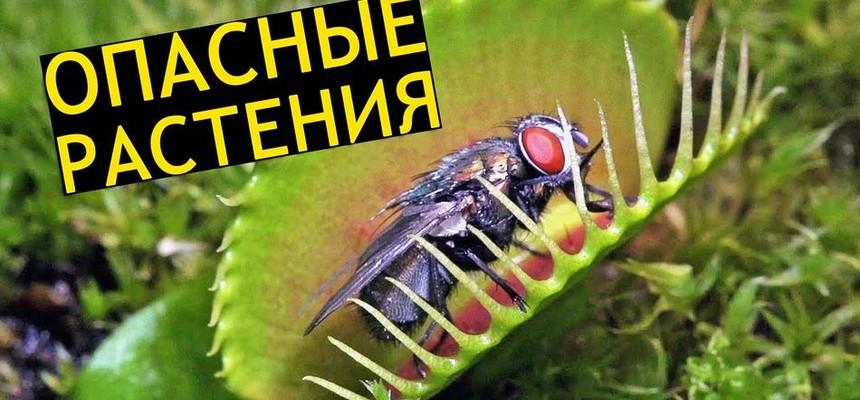 Опасные растения которые растут у Вас дома