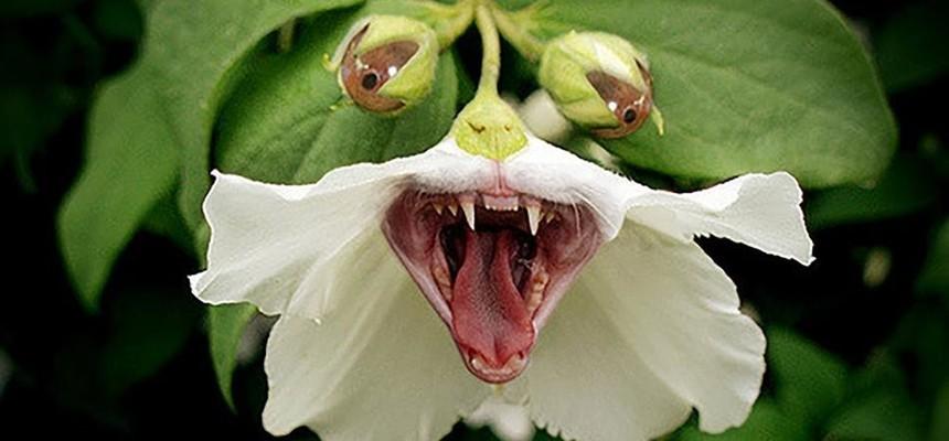 Смертельно опасные растения которые растут возле Вашего дома