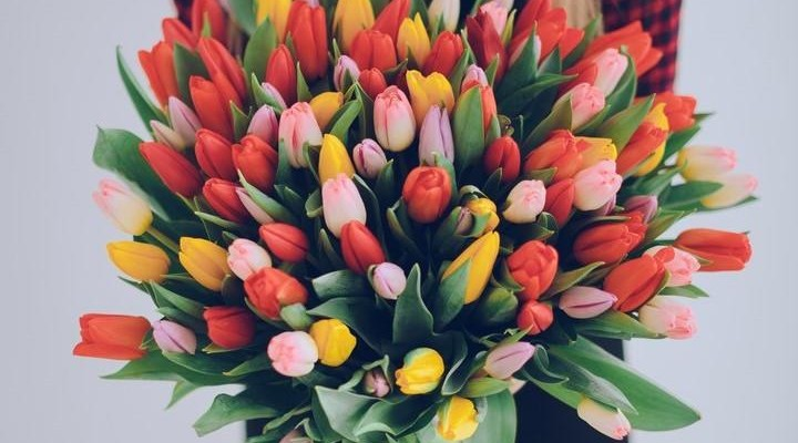Почему на 8 Марта дарят тюльпаны