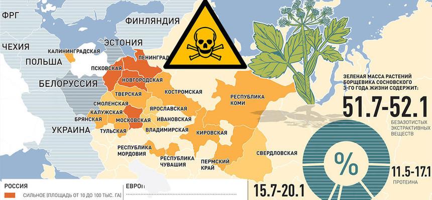 Самое страшное растение победоносно шествует по России