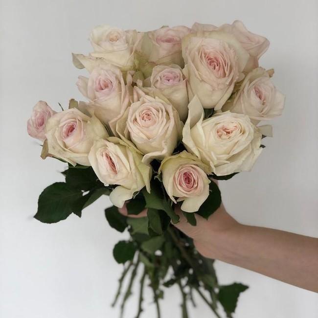 Premium розы Вайт О'Хара (White O'Hara) (Штучно)