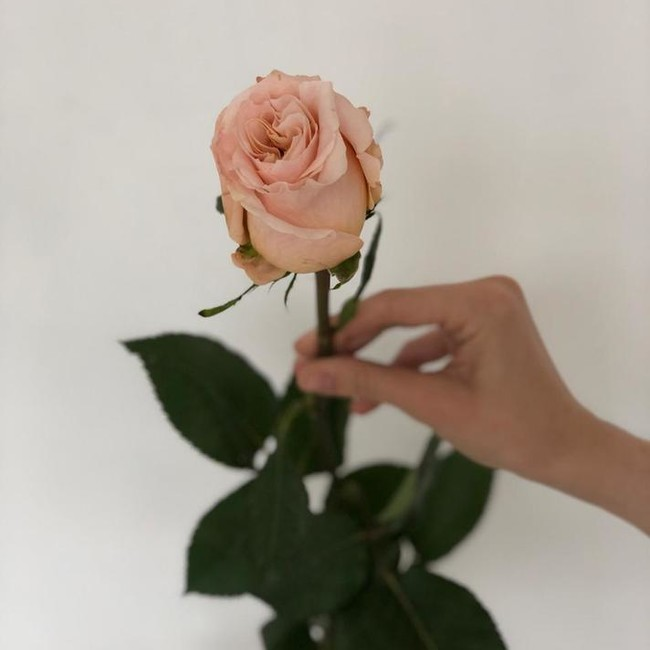 Премиум роза Shimmer (Штучно)