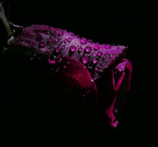 Услуга доставки цветов в нерабочее время (ночное) - вид 1
