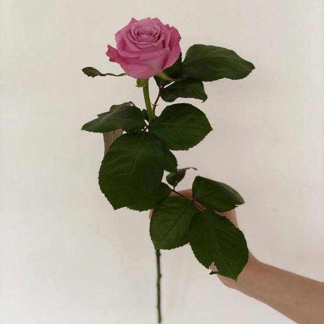 Розы Маритим (Штучно)